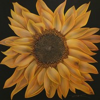 C15-007